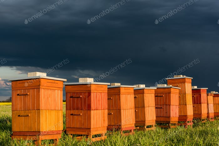 Beehives in Apiary. Bio Honey Production and Beekeeping Concept.