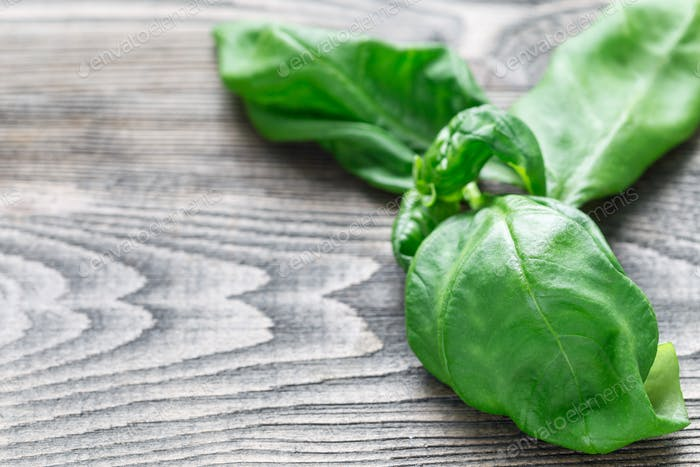 Fresh basil leaves on a gray wooden background, horizontal, copy