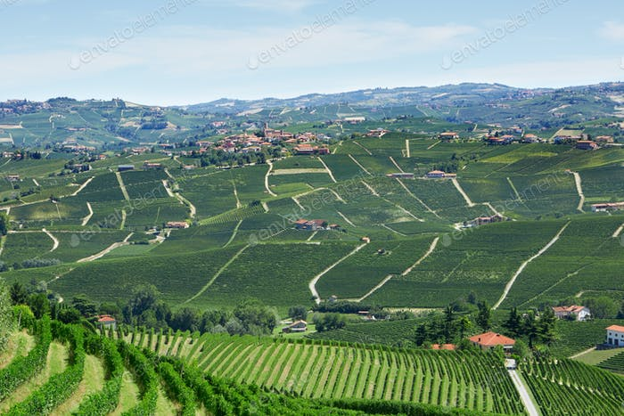 Green countryside with vineyards and Serralunga d'Alba town in Italy