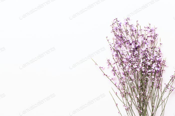Flowers composition. Pink flowers on pink background. Easter, spring concept. Greeting card.