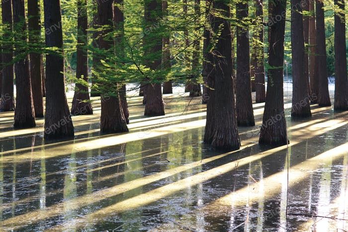 flooded forest