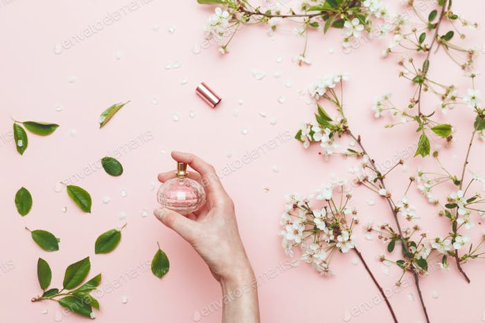 Perfume water in woman hand with spring blossom. Top view on pink isolated background, flatlay.