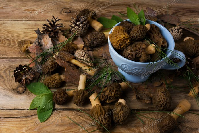 Blue bowl with black morel mushrooms on the wooden background