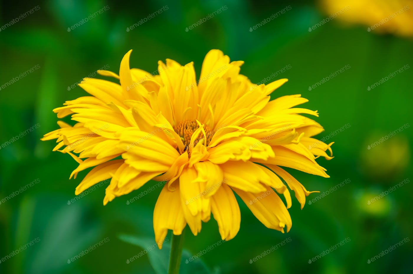 Yellow Flower On A Green Background Photo By Zeffss On Envato Elements