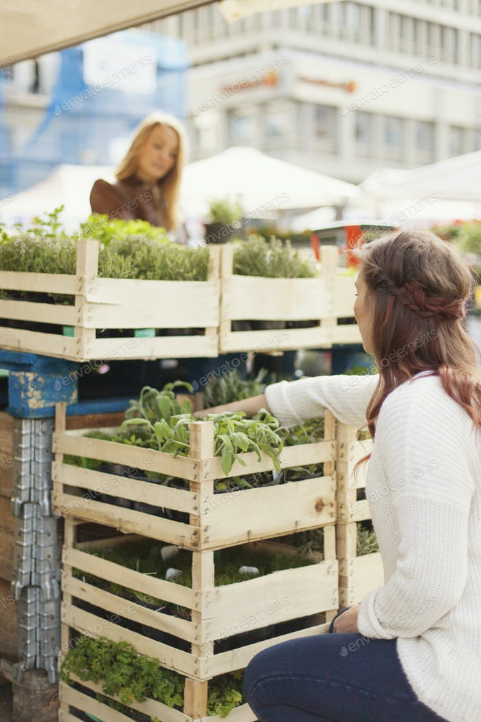 Woman crouching and shopping plant with friend in stall at market