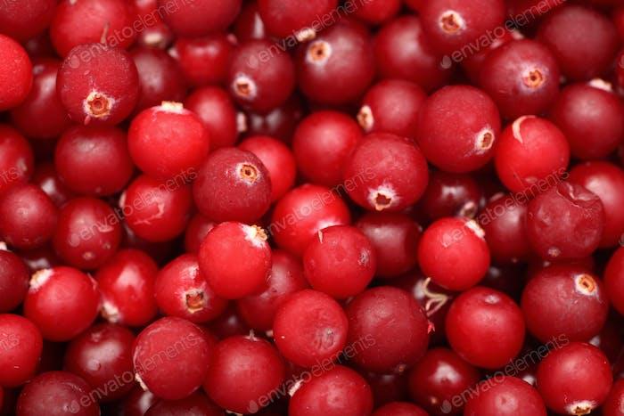 Gefrorene Cranberry