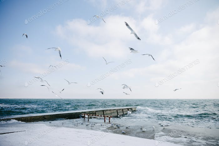 Pier on Winter Seashore With Flying Seagulls