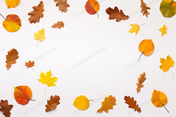 Colored fallen leaves form round frame on white background