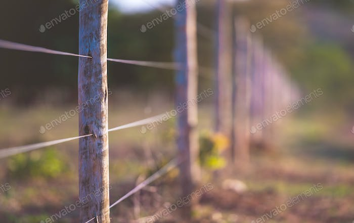 Wire Wooden Fence