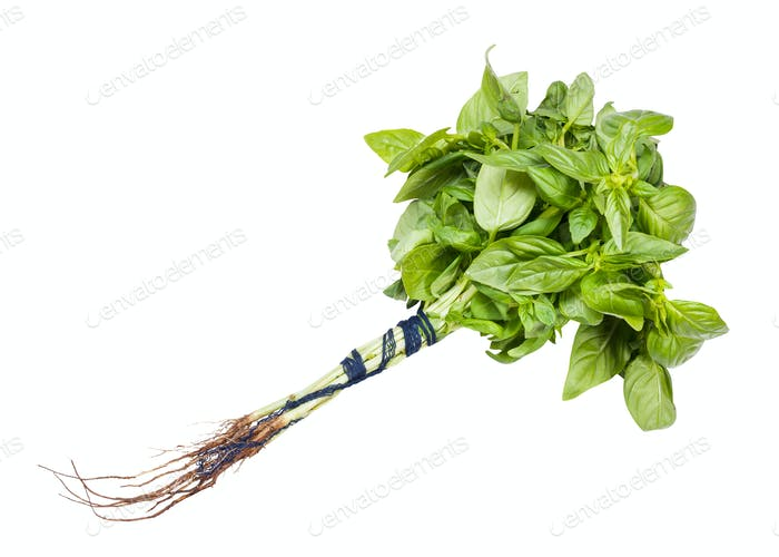 bunch of green sweet basil herb isolated on white