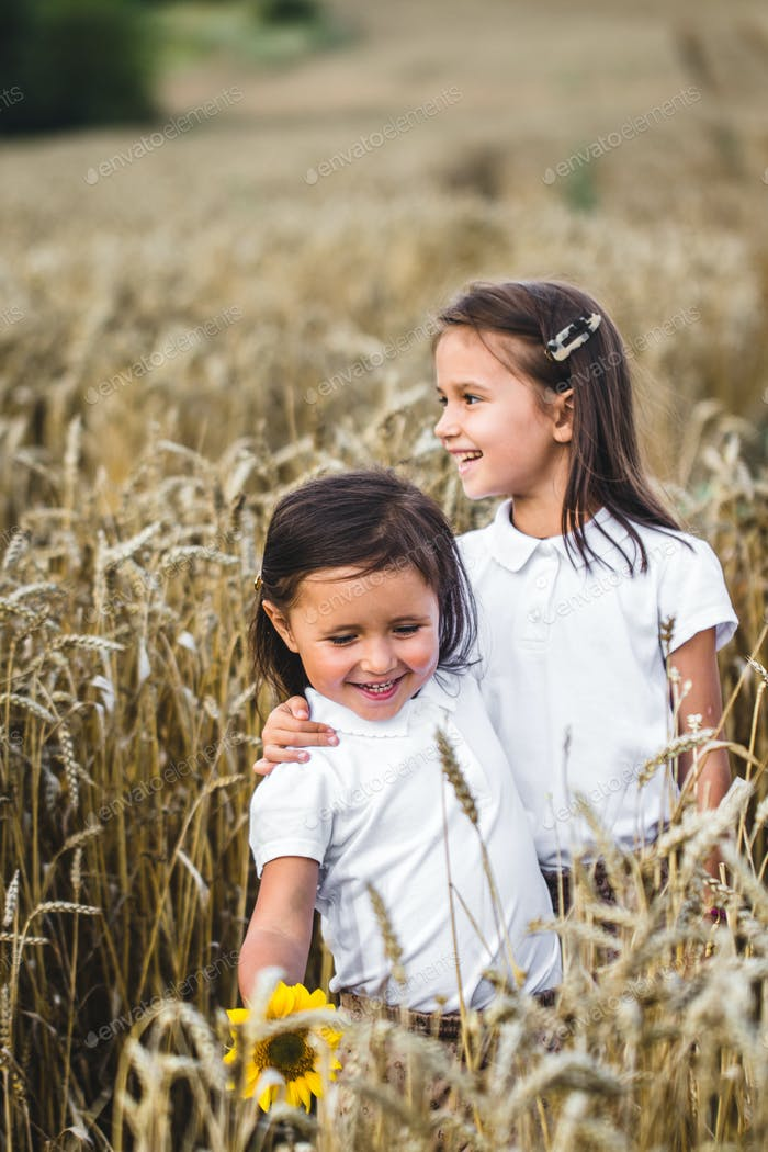 Two adorable little sisters walking happily in wheat field on warm and sunny summer day