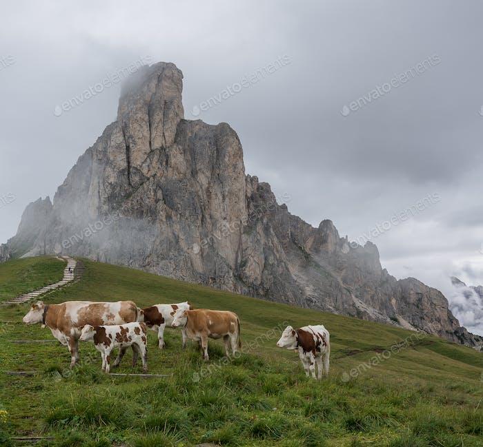 Kühe in den Dolomiten an einem bewölkten Tag