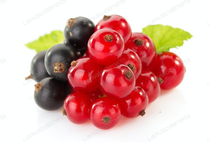 black and red currants on white
