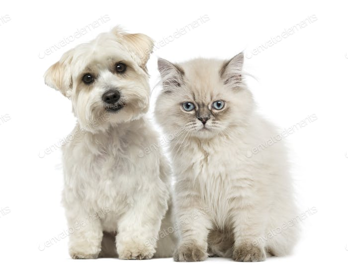 Kitten and dog sitting together and looking at the camera