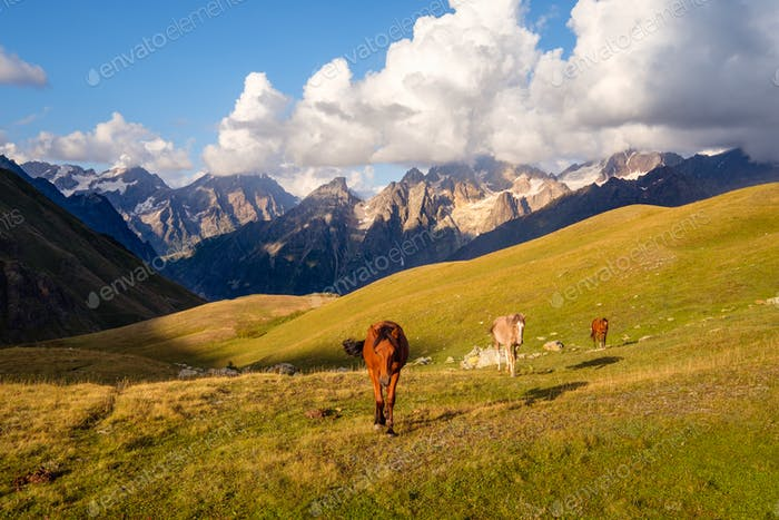 Beautiful mountain landscape with wild horses in Svaneti, Georgia