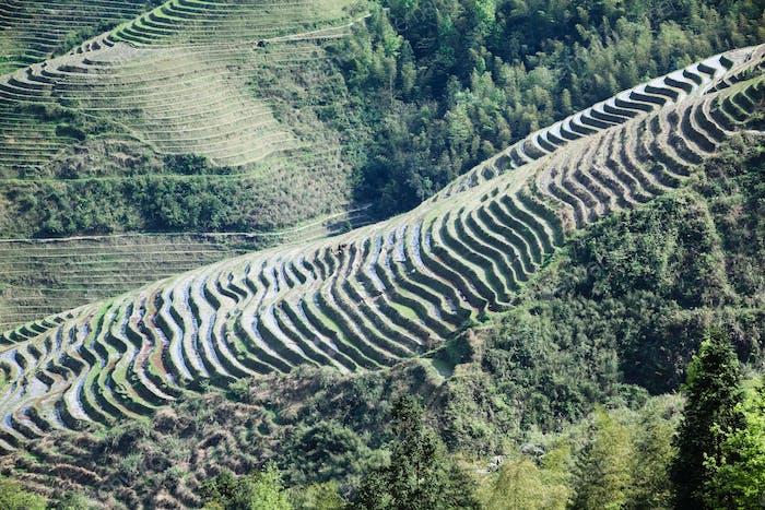 schöne terrassierte Felder