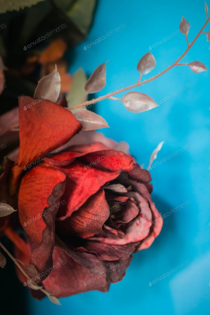 roses on a blurry images