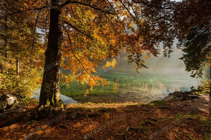 Autumn vibrant colors over alpine lake and forest