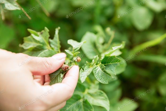 Nahaufnahme Foto von grünen Pflanzen und menschliche Hand hält es