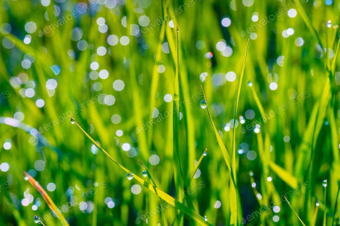 background of dew drops on grass