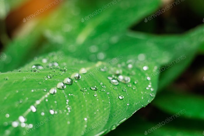 drops on leaves with the freshness