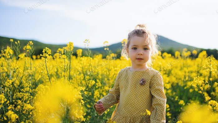 Front view of happy small toddler girl standing in nature in rapeseed field
