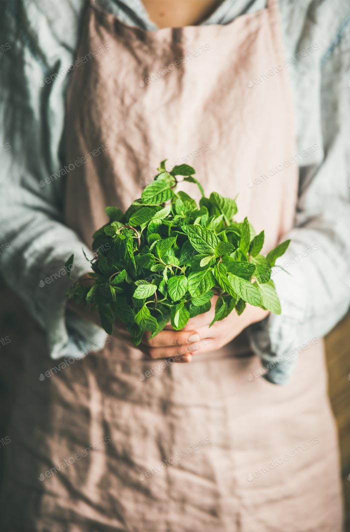 Female farmer holding bunch of fresh green mint, selective focus