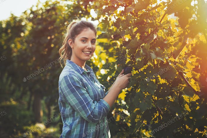 Woman inspecting grapes