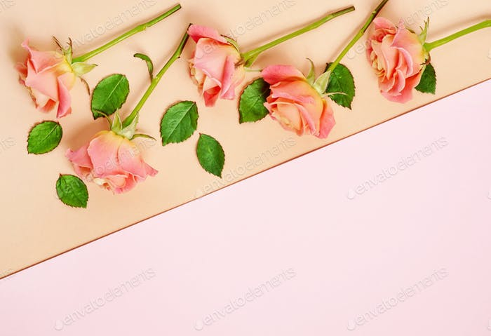 pink roses on colorful paper background