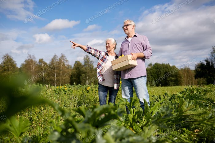 happy senior couple with box of squashes at farm