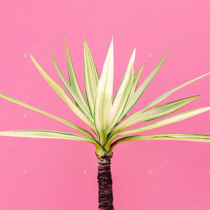 Tropical plant on pink. Mini palm.  Minimal fashion art