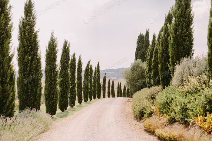 tuscany view with cypress trees