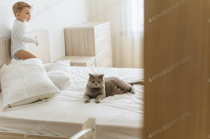 adorable little child and grey british shorthair on bed at home