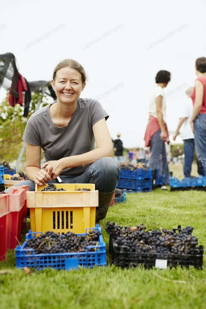 The owner of a vineyard at harvest time