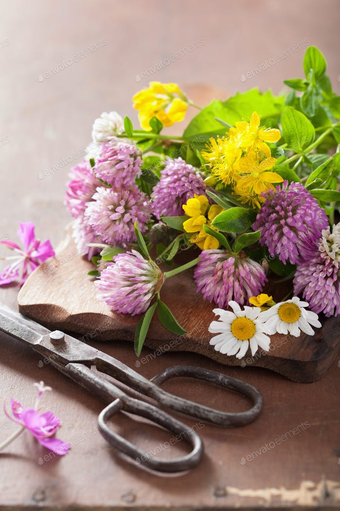 bunte medizinische Blumen und Kräuter