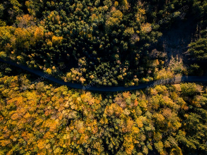 Road in the autumn forest aerial drone view