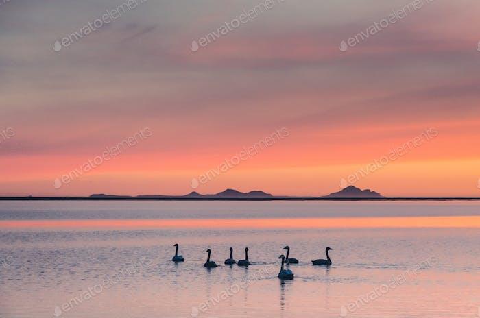 Schwanensee in Sonnenuntergang, zarte Foto, Kunst