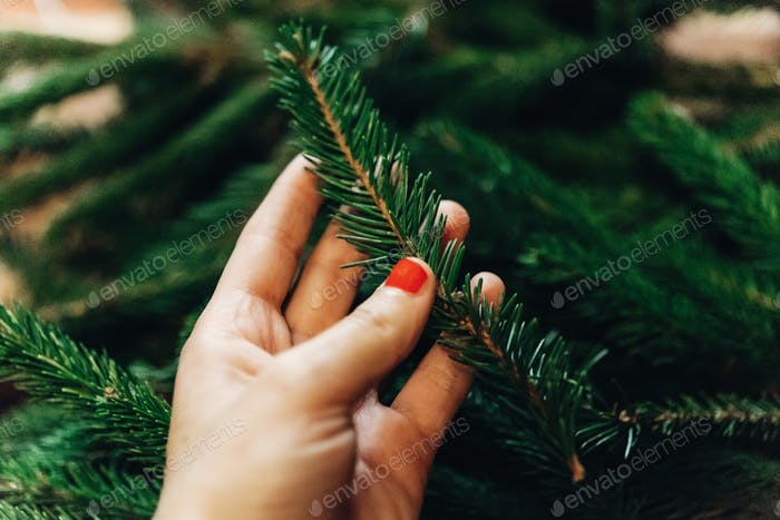 green fir branches. decorating christmas tree