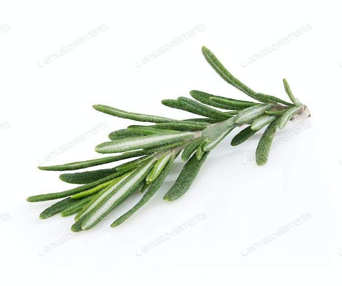 Fresh rosemary isolated on white background.