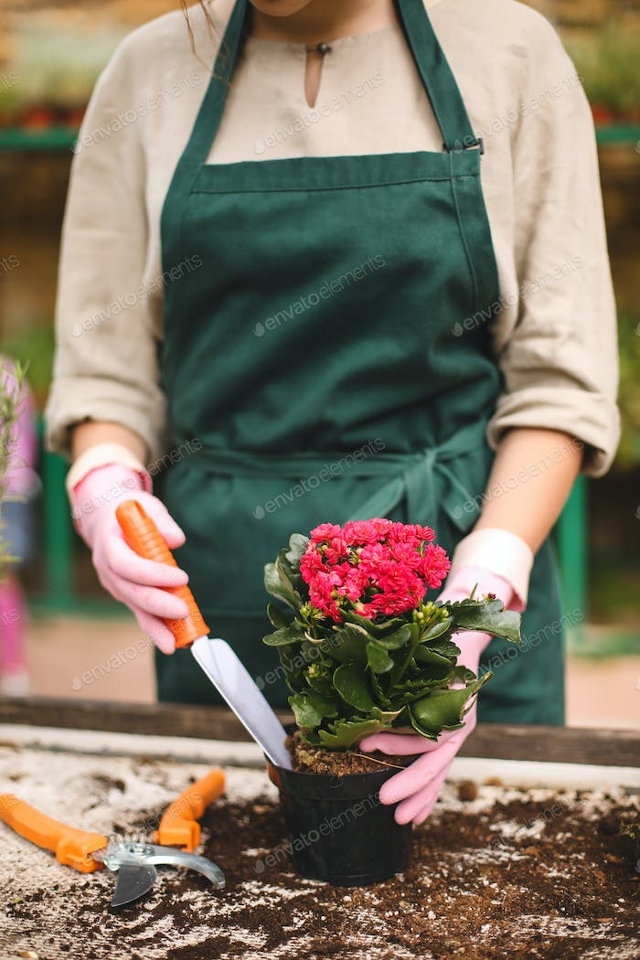 Close up florist in pink gloves using little garden shovel while planting a beautiful flower in pot