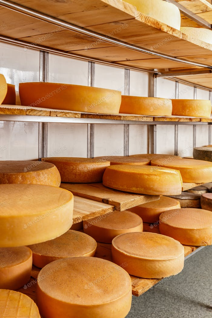 Several mature cheese-wheels