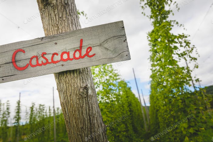 Cascade hop field