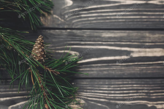 Christmas tree branches and pine cones anis
