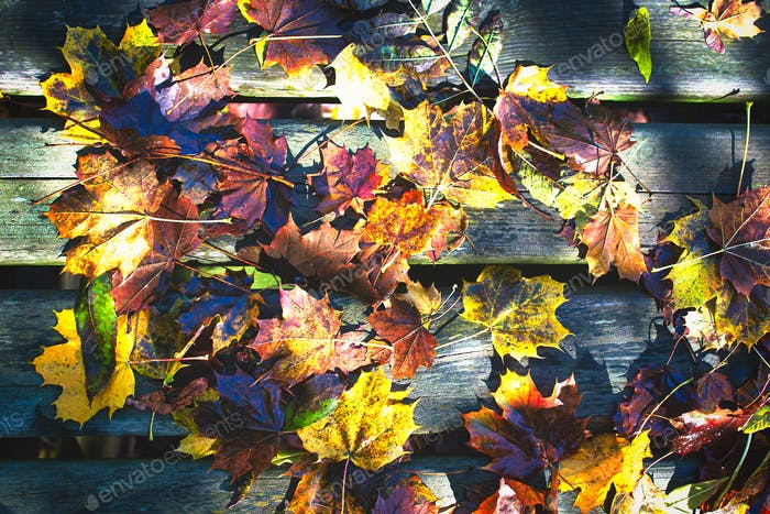 Large autumn colored leaves