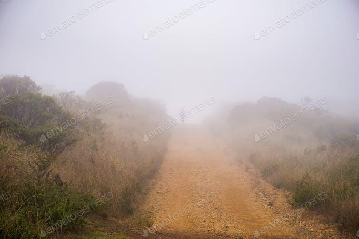 Weg mit Nebel bedeckt