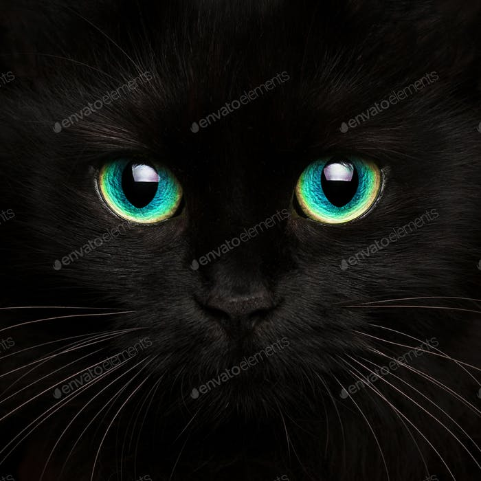 Cute muzzle of a black cat close up