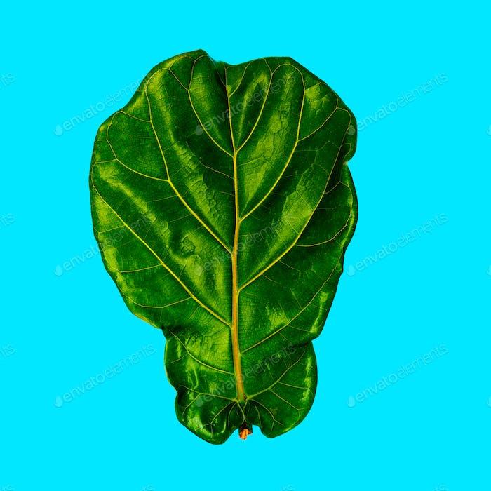 Tropical Leaf. Plant. Greenery concept. Flat Lay