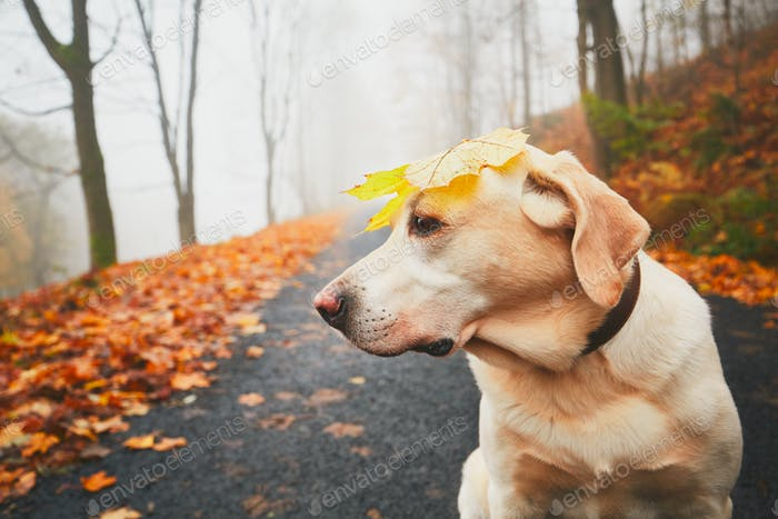 Funny dog in autumn