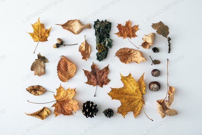 Seasonal autumn or fall still life with assorted leaves