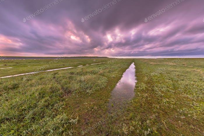 Sonnenuntergang über Graben im Gezeiten-Sumpf